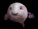 Рыба капля_1